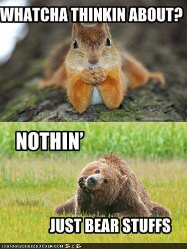 thinking-lol-squirrel-and-bear.jpg.b0a4b615ac633a3eff51d720eb14d81f.jpg